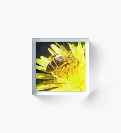Pollinated Honeybee Acrylic Block