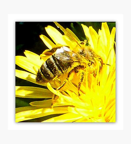 Pollinated Honeybee Photographic Print