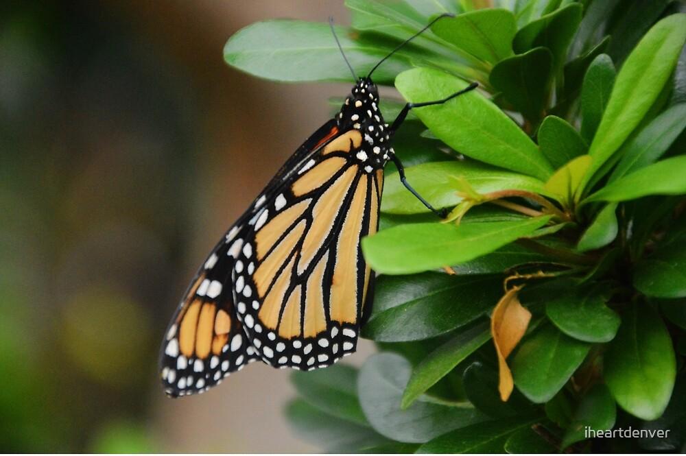 Folded Butterfly by iheartdenver