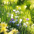 Spring sunshine by Zoe Power