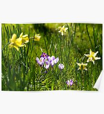 Happy spring flowers Poster