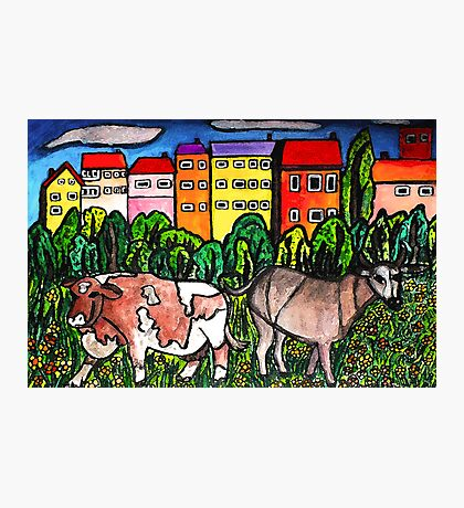 Cow Country Photographic Print