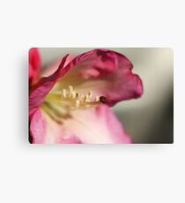 Im sticking my *tongue out at you* Canvas Print