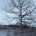 Waiting For Spring by lorilee
