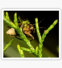 Firefly (1) Sticker