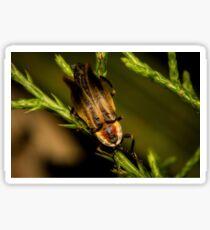 Firefly (3) Sticker