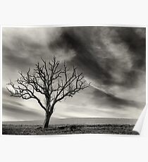 tree thunder sky clouds Poster