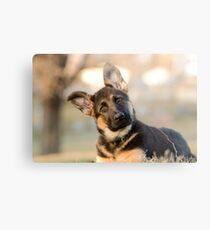 Puppy German Shepherd Metal Print