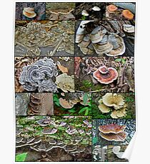 Bracket Fungi Montage - Shelf or Plate Fungi Poster