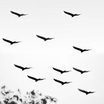 Bird of a feather by Maliknotmalik