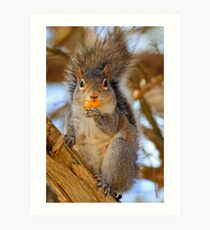 """Yummy on my Tummy, hows """"this"""" for a pose? by NatureGreeting Cards ©ccwri Art Print"""