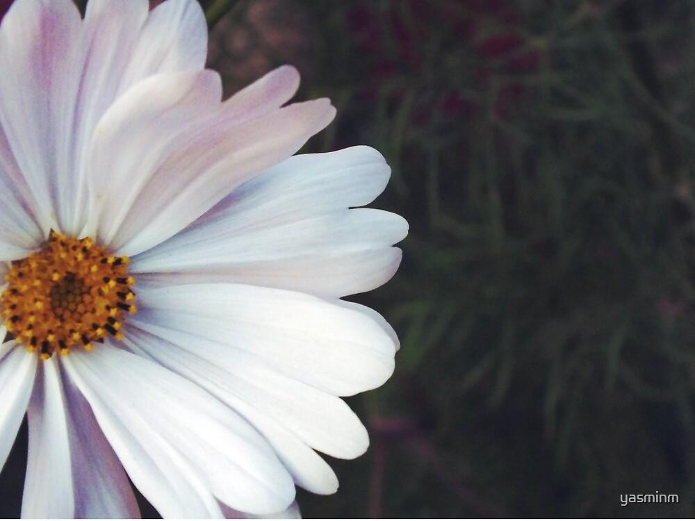 Daisy by yasminm