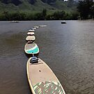 Surf Boards in Line by abryant