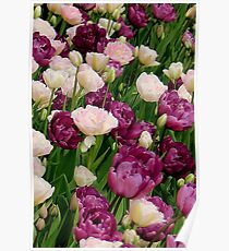 Peony Tulips Poster