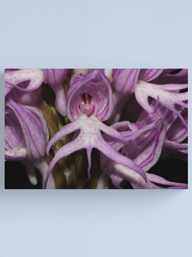 Alternate view of Orchis italica  Canvas Print