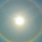 Sun Halo  by Shellie Phipps