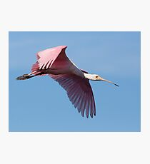Roseate Spoonbill Soars Photographic Print