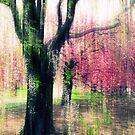 Cherry Tree Impressions by Jessica Jenney