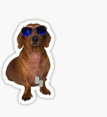 Dachshund Sausage Dog wearing Aviators Sticker
