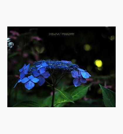Midnight in the Garden  Photographic Print