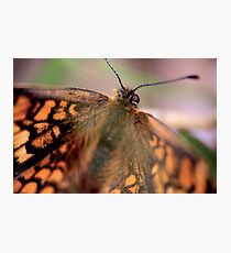 Butterfly © PH. Max Facchinetti  Photographic Print
