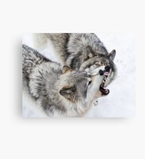 Wolves' theeth Canvas Print