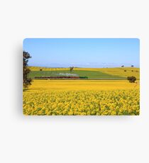 3642 passes Canola fields  - Old Junee Canvas Print