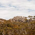 Looking East of Wombat Pool by samg