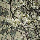 Blossom Wall by CreativeEm