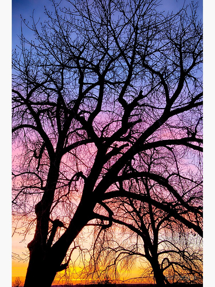 Colorful Tree by mrbo