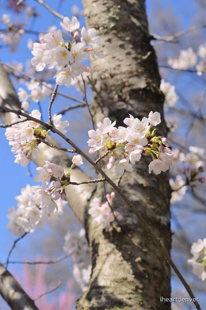 Cherry Tree by iheartdenver