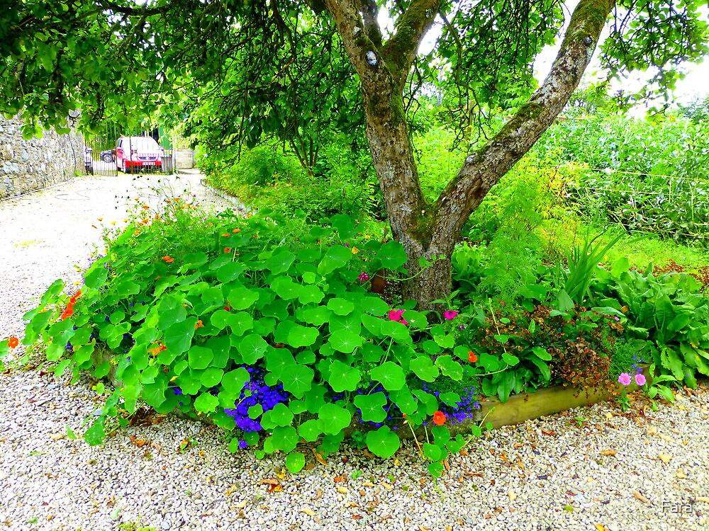 Another Corner Of The Irish Organic Garden by Fara