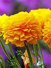 Pretty Yellow Flowers by FrankieCat