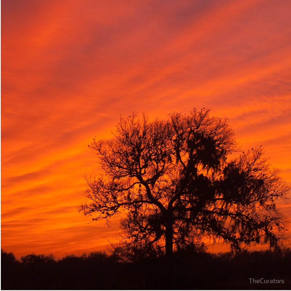 Texas Sunset by TheCurators