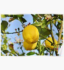 Growings Lemons in the sun Poster