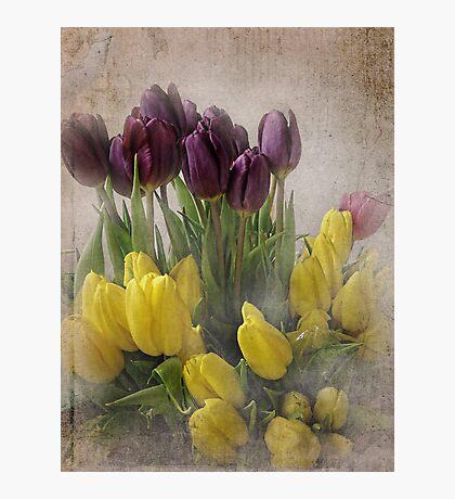Spring Tulips Fotodruck