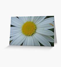 Pretty white and yellow chrysanthemum Greeting Card