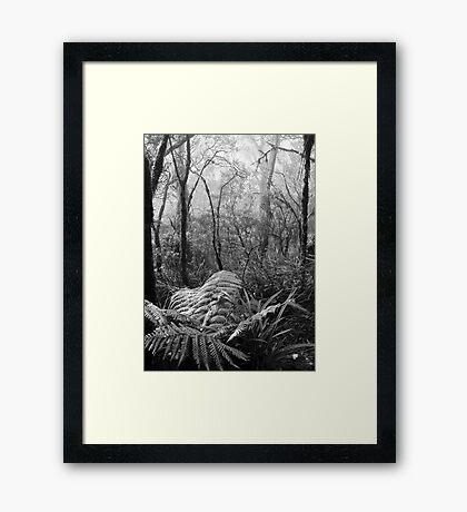 Rainforest No.7 Framed Print
