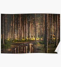 Sunset forest Poster