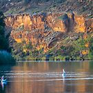 Peaceful Pelicans by Dave  Hartley