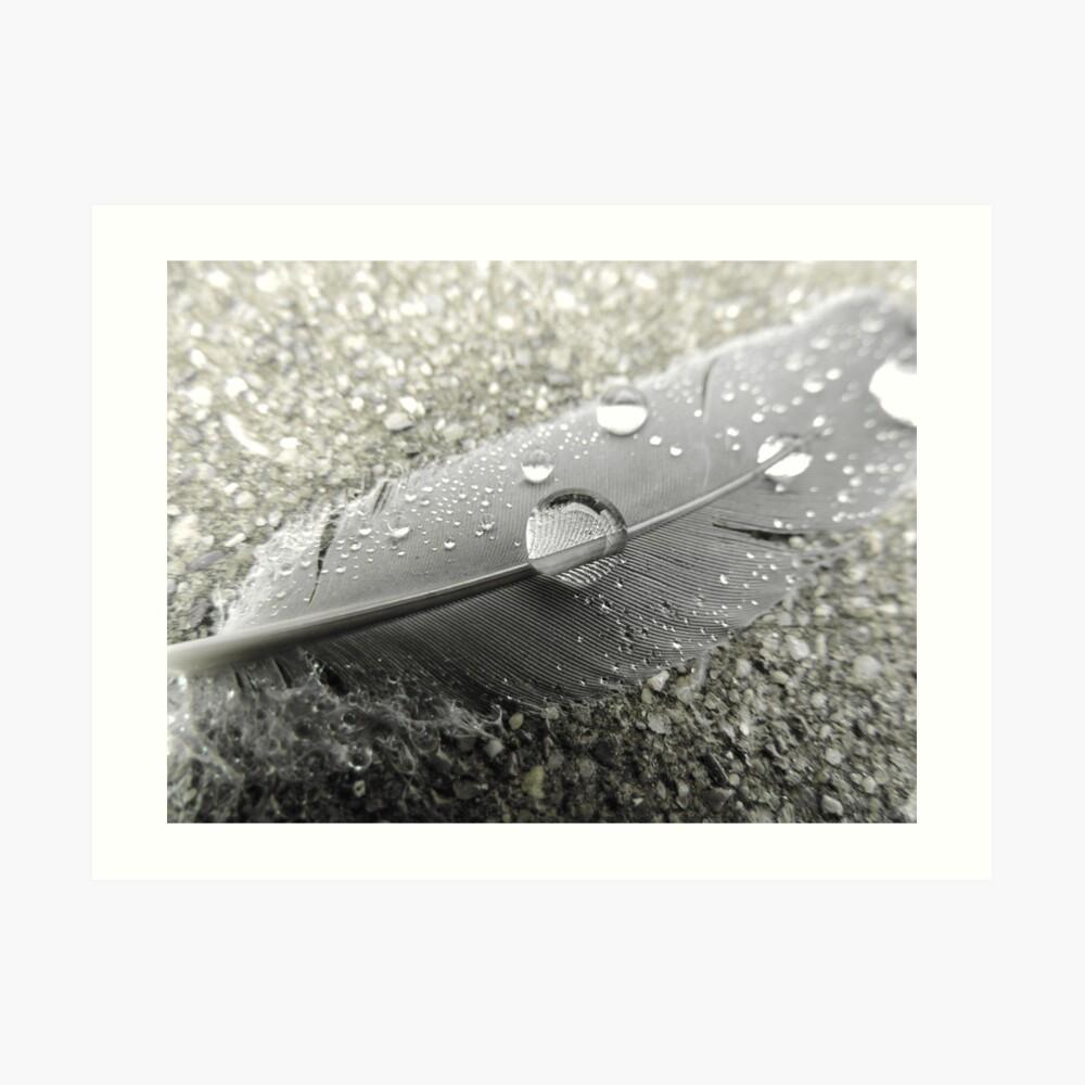 Feather with dew drops Kunstdruck