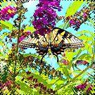 Yellow Butterfly on Flower by JanDeA