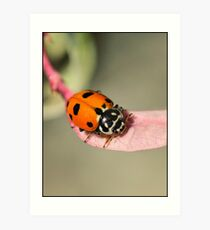 Orange Ladybeetle Art Print