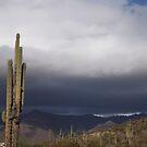 Rainy Arizona Desert by Robbi Levesque