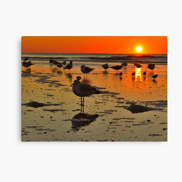 Sunrise Bird on IOP Canvas Print