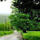 Vermont, 2013 by Elfriede Fulda