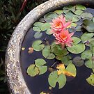 Water Lily by abryant