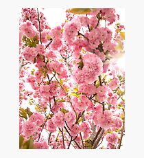 Hot Bloom Photographic Print
