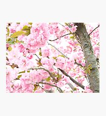 Fairy Blossom Photographic Print
