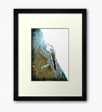 ©NS A Spider Life XIVA IOIOb Framed Print